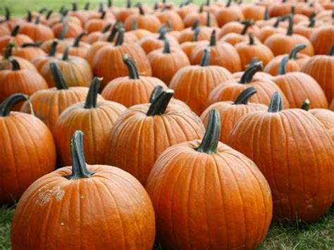 8 apple orchards and pumpkin patches in central Iowa