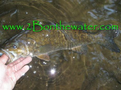 2Bonthewater Guide Service - 2015 Fishing Reports Page