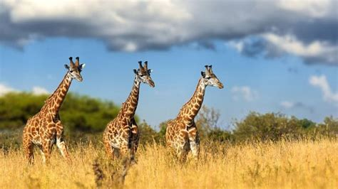Cradle of Human Kind and Lion Park Tour Full Day Tour from